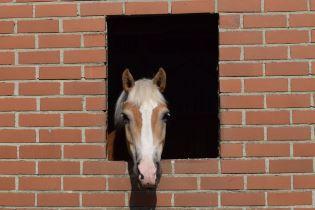 Ein Pferd schaut aus seiner Pferdebox des Reitstall Berkenheide.