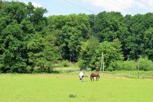 Hier ist eine grüne Wiese auf der zwei Pferde Grasen zu sehen. Aufgenommen beim Reitstall Berkenheide in Greven.
